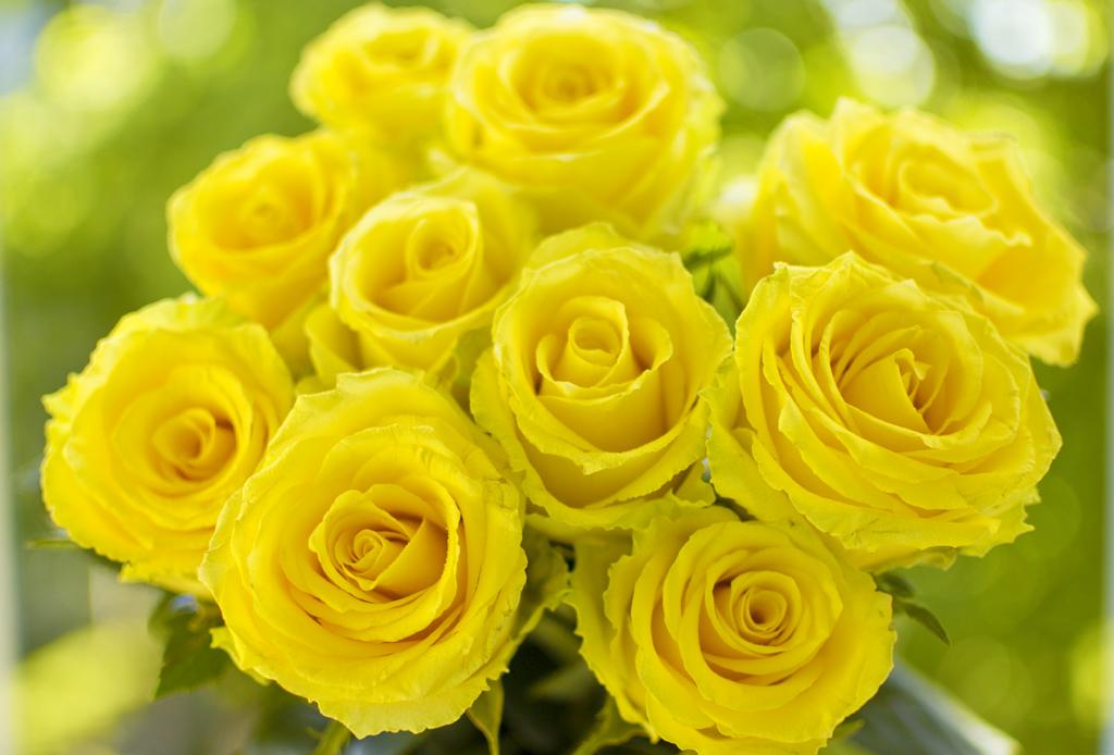 rožės ant varpos kaip padidinti nari ir kokiu budu