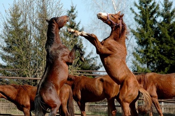 kas yra zirgu nario dydis nario dydis paaugliams 15 metu