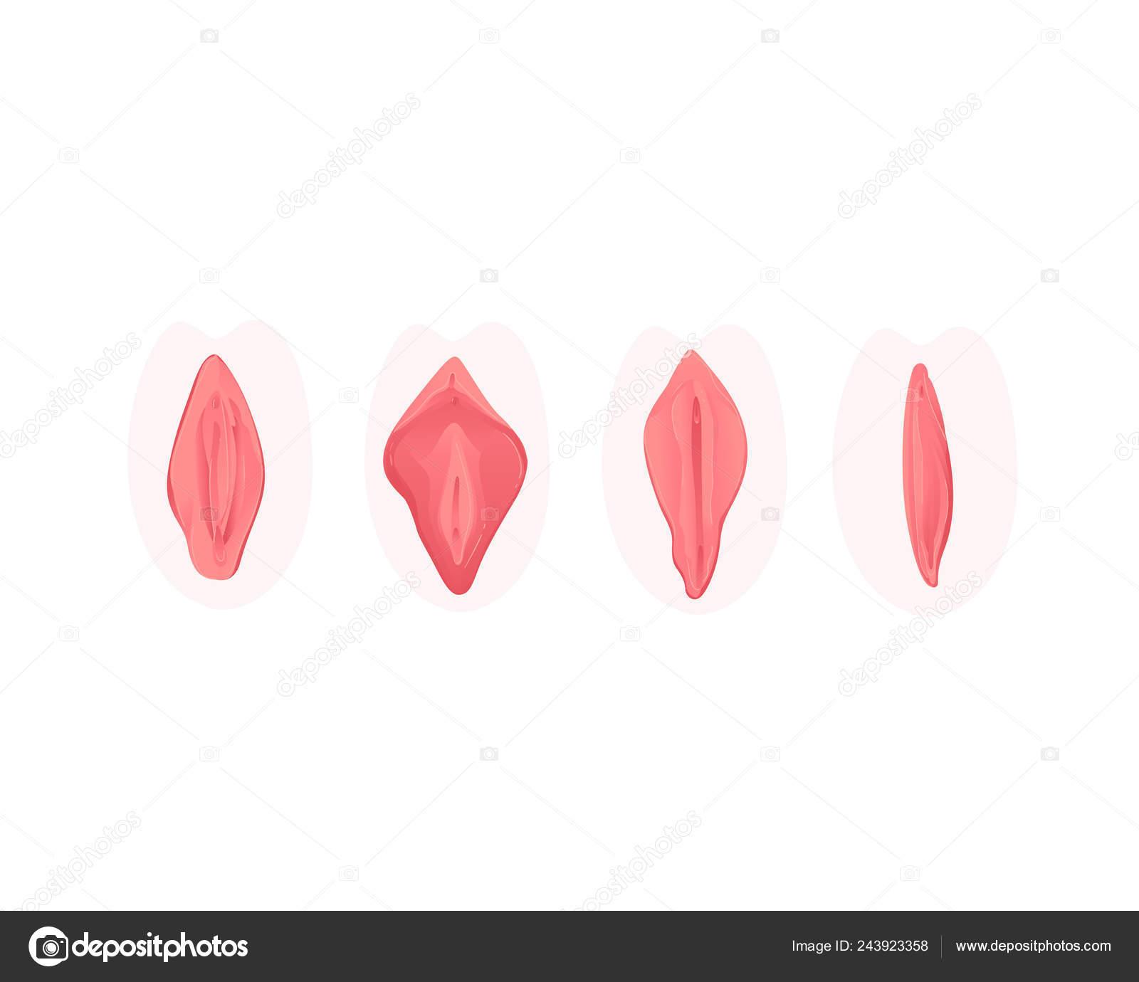 stock foto dydziai genitaliju nariu